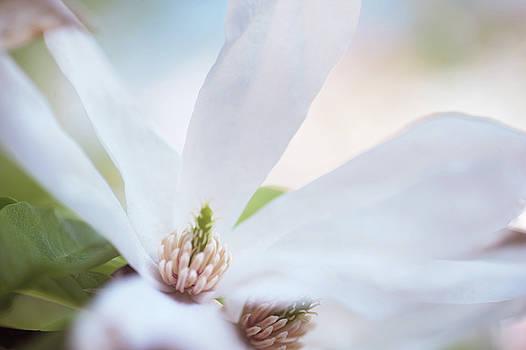 White Magnolia CloseUp by Jenny Rainbow