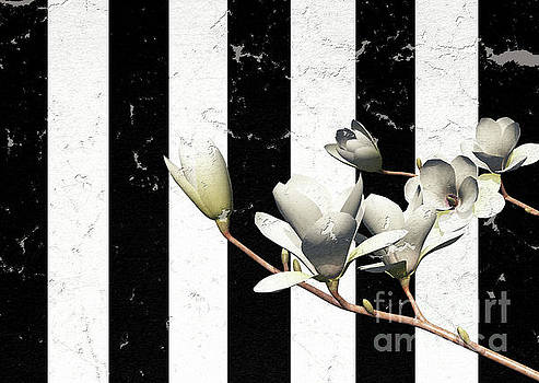 White Magnolia ..digital by Elaine Manley