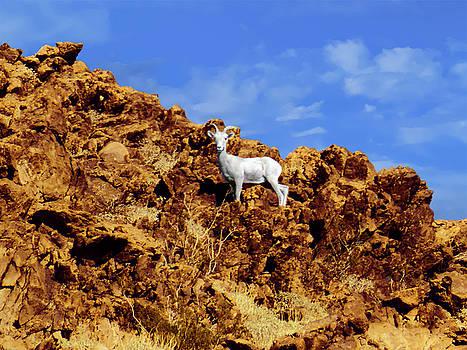 White Bighorn Sheep by Alan Socolik