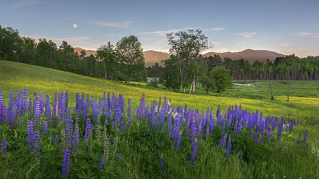 White Mountain Sunset by Bill Wakeley