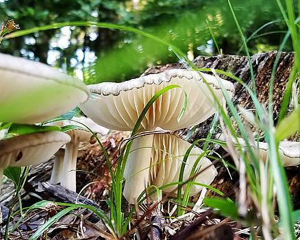 White Mushrooms by Farol Tomson