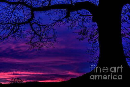 White Oak Tree at Dawn by Thomas R Fletcher