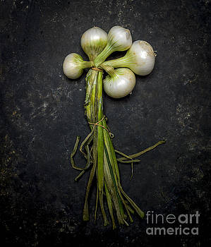 BERNARD JAUBERT - White onions.