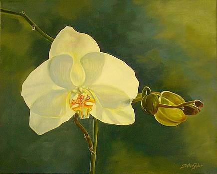 White Orchid by Cynthia Snider