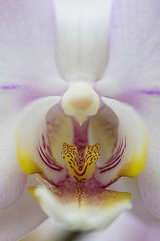 White Orchid by Ron Grafe
