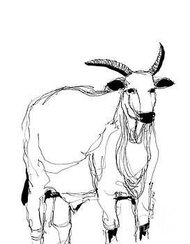 White ox by Cristina Jaco
