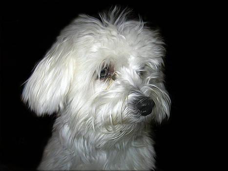 White Puppy by Savannah Gibbs