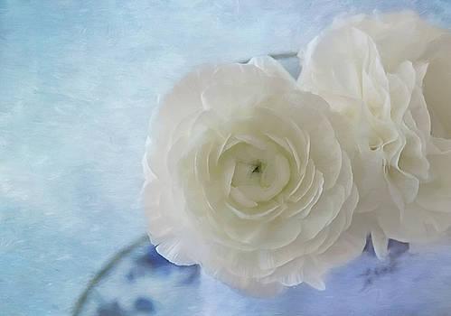 White Ranunculus Beauty by Kim Hojnacki