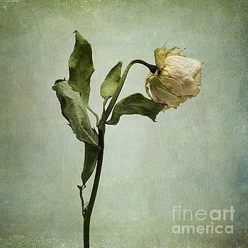BERNARD JAUBERT - White Rose desiccated