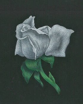 White Rose by Troy Levesque