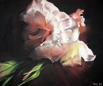 White Roses by Beka Burns