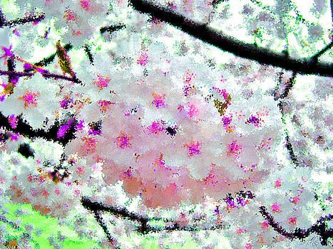 White Sakura Hybrid by Bruce Nutting