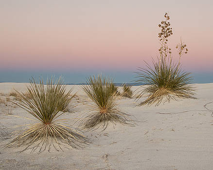 White Sands National Monument by Lois Lake