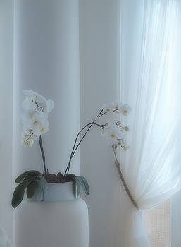 White Series Soft by Joyce Hutchinson
