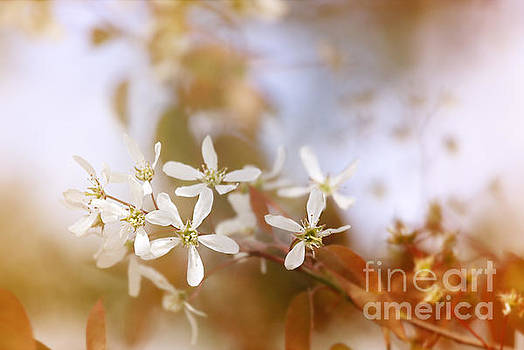 LHJB Photography - White spring blossoms..