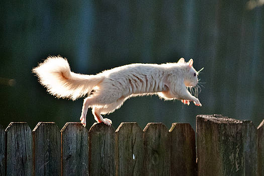White Squirrel  by Randall Branham