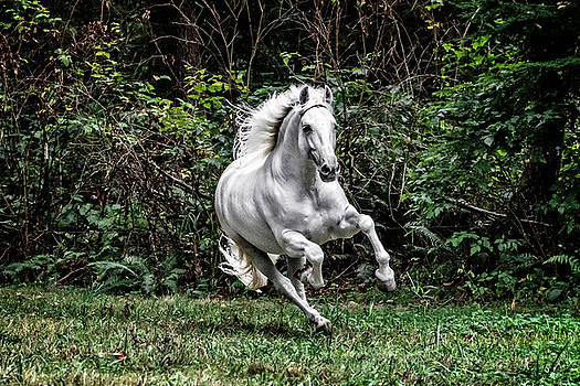 White Stallion D4833 by Wes and Dotty Weber