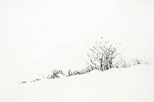 Jenny Rainbow - White Stillness. Minimalism