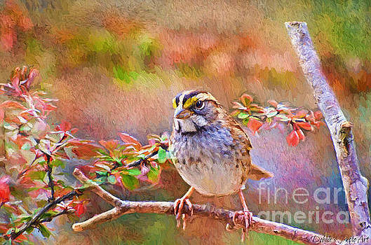 White Throated Sparrow - Digital Paint by Debbie Portwood