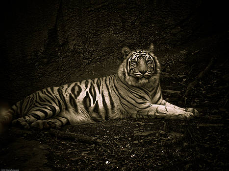 White Tiger by Hunter Productions