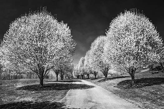 Debra and Dave Vanderlaan - White Trees