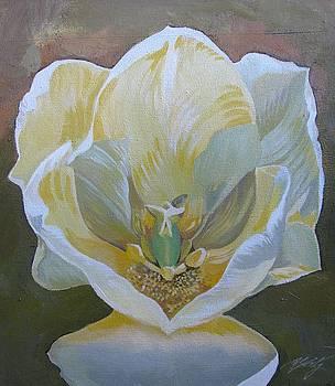 Alfred Ng - white tulip