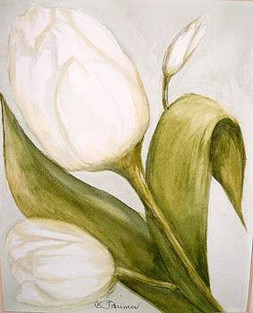 White Tulip by Constance Larimer