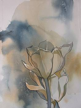 White tulips with blues by Alfred Ng