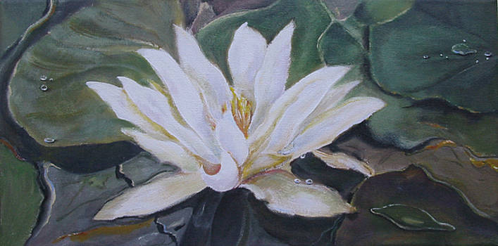 White Water Lily by Eve Corin