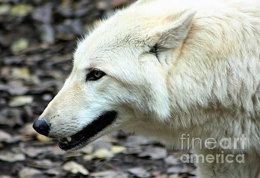 Nick Gustafson - White Wolf Profile