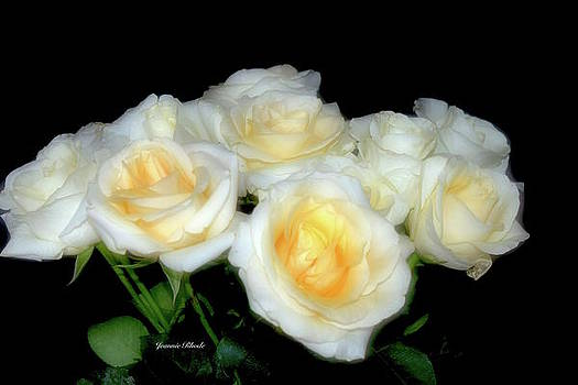White/Yellow Roses in Softness by Jeannie Rhode Photography