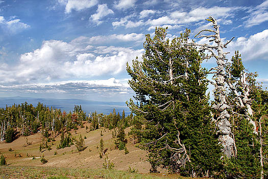 Christine Till - Whitebark Pine trees Overlooking Crater Lake - Oregon