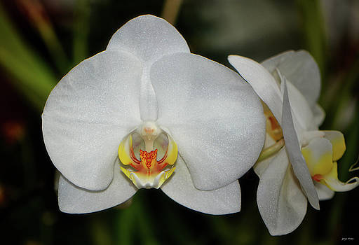 White Orchid 033 by George Bostian