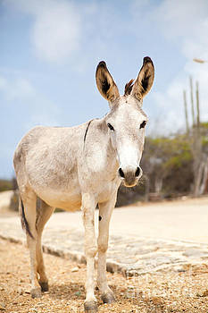 Who Wants a Donkey Kiss by Christy Woodrow