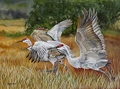 Sandhill Cranes In A Field by Phyllis Beiser