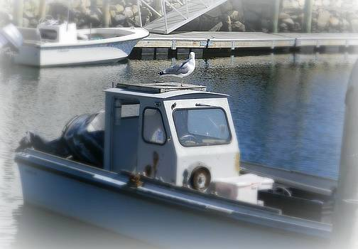 Wickford Harbor boat and Gull by Diane Valliere