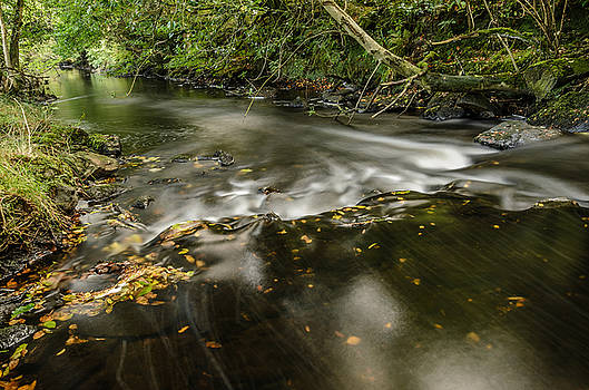 Wicklow Stream by Martina Fagan