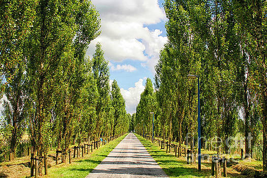 Wide road with trees by Patricia Hofmeester