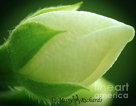 Wild Beauty by Missy Richards