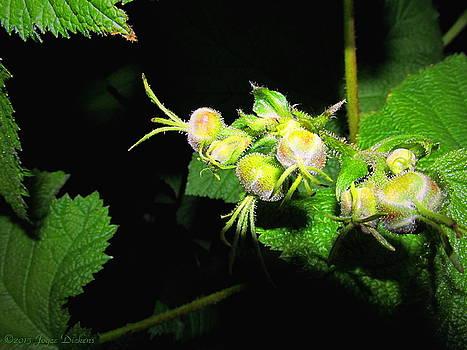 Joyce Dickens - Wild Berries In The Making
