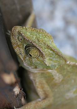 Tracey Harrington-Simpson - Wild Chameleon In Green Shades