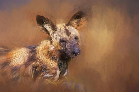Wild dog. by Lyn Darlington