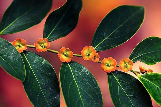 Wild Florets by Janet Pancho Gupta