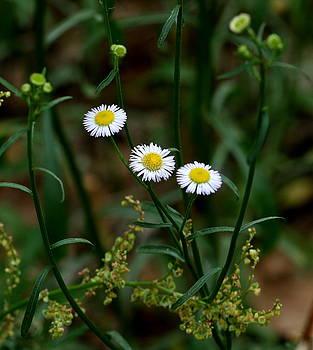 Wild Flowers by Cathy Harper