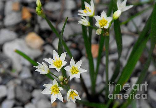 Wild Flowers by Diane McDougall