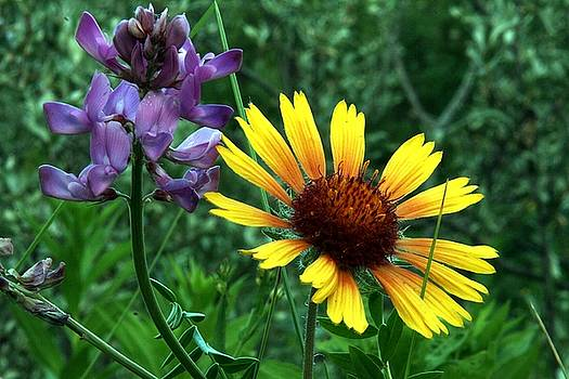 Wild flowers by Mario Brenes Simon