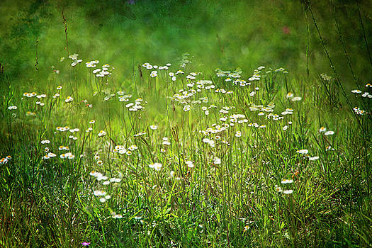 Regina Williams - Wild Flowers