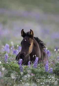 Wild Foal at Dawn by Carol Walker