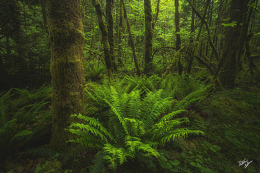 Wild Forest by Peter Coskun