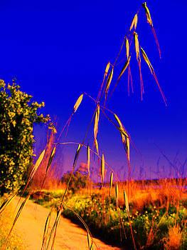 Wild Grass by Ingrid Dance